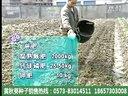 黄秋葵种植技术与田间管理视频