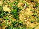 进入燕麦种植基地人们看见有机菜