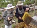 琼思美黑蜂蜂蜜椴树蜜中国家庭蜂蜜开创品牌视频