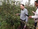 国庆逛果园纪实之3梨树高纺锤形整形修剪技术讲解视频