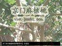 文玩核桃树苗品种价格视频