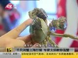 【视频】千只河蟹上海打擂 专家支招教你选蟹
