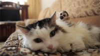 猫妈妈认养被弃松鼠猴