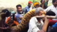 印度百名猎人围杀食人虎