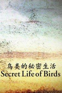 慈禧秘密生活