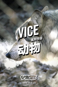 VICE动物
