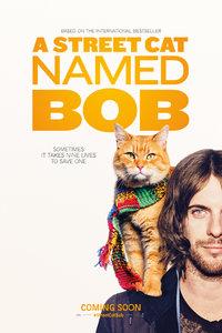 流浪猫鲍勃/街角遇见猫