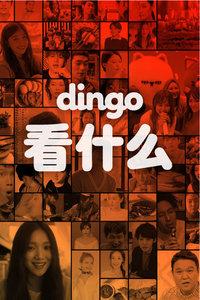 dingo看什么2017