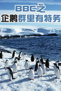 《企鹅群里有特务》全3集在线观看