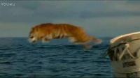 少年派的奇幻漂流 片段之Richard Parker