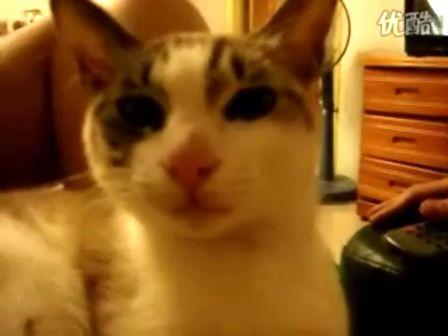 会说自己漂亮的猫咪..好可爱啊