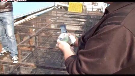 掌心-搜鸽网的视频-优酷频道的视频视频图片