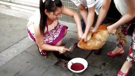 一美女残忍杀鸡