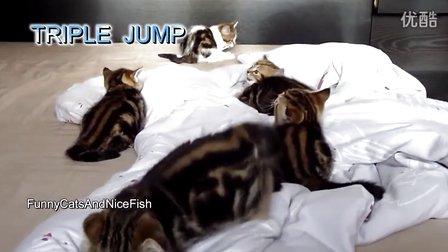 可爱小猫咪的奥运会