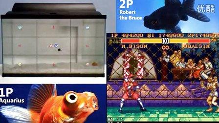 惊呆了!看两只金鱼如何对战《街头霸王II》