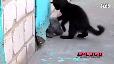 贵宾犬被卡黑猫警长紧急救援