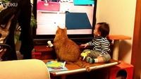 小正太和猫咪一起看多米诺。。。