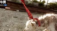 垃圾场发现脱毛瘦狗 好心人拯救一年后大变身