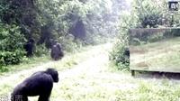 当森林里的野生动物第一次看到镜子里的自己。。。