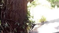 干脆面麻麻教孩子爬树完整视频版,也是操碎了心啊