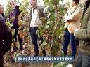 思远农业专家于强现场讲解葡萄种植技术视频