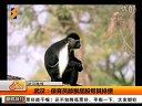 武汉:保育员舔猴屁股帮其排便