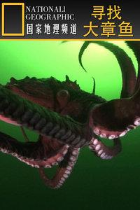 寻找大章鱼