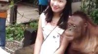 漂亮妹子怎么就是喜歡猴子做男朋友