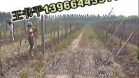 瓜蔞種植技術視頻教程