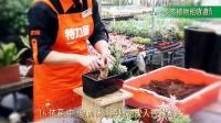 特力屋DIY酵合盆栽-多肉植物组合盆景视频