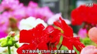 让人向往的英国的天竺葵花园视频