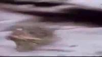 人與自然百度種子搜索神器手機版_動物世界獵隼全集_自然傳奇虎魚