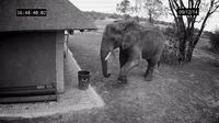 好有礼貌的大象,吃完之后还帮忙捡垃圾